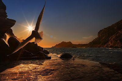 Emmanuelle douriez l'oiseau et le rétablissement